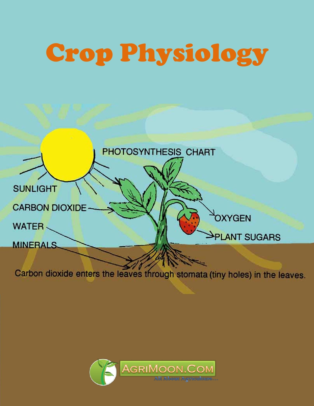 Crop Physiology PDF Book -